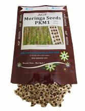 Moringa-seeds-pkm1